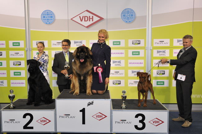 FCI group II - Winners of the International dog show «Federal Winner 2015» Dortmund, 16 - 18 October 2015 (BIS photo)