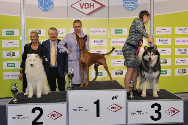 FCI group V - Winners of the International dog show «Federal Winner 2015» Dortmund, 16 - 18 October 2015 (BIS photo)