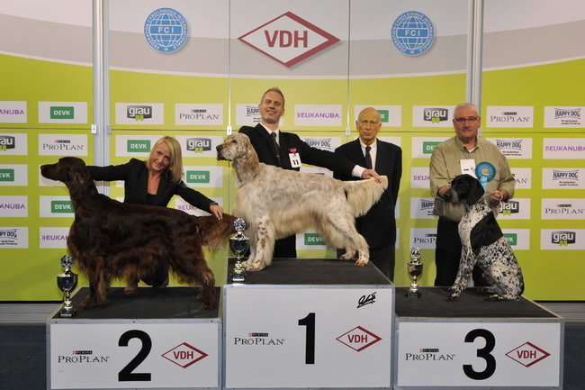 FCI group VII - Winners of the International Dog Show Dortmund (Germany), 16 - 18 October 2015 (BIS photo)