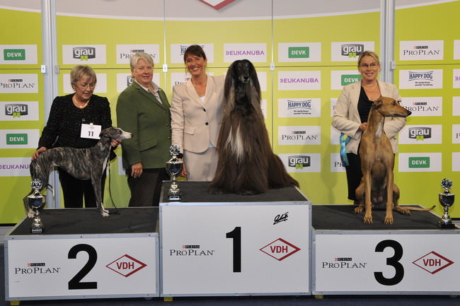 FCI group X - Winners of the International Dog Show Dortmund (Germany), 16 - 18 October 2015 (BIS photo)