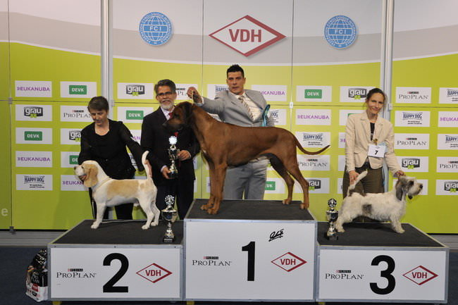 FCI group VI - Winners of the International Dog Show Dortmund (Germany), 16 - 18 October 2015 (BIS photo)