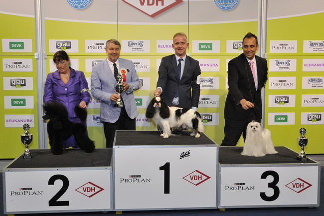 FCI group IX - Winners of the International Dog Show Dortmund (Germany), 16 - 18 October 2015 (BIS photo)