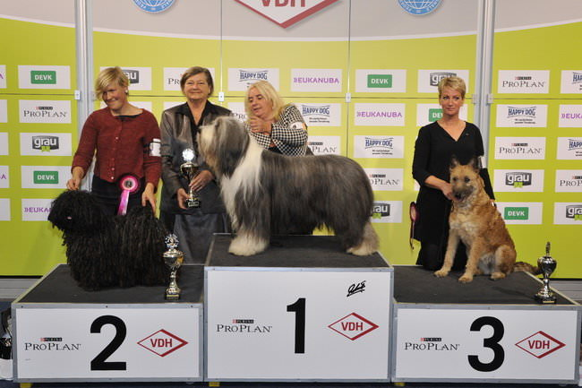 FCI group I - Winners of the International dog show «Federal Winner 2015» Dortmund, 16 - 18 October 2015 (BIS photo)