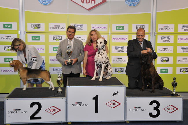 FCI group VI - Winners of the International dog show «Federal Winner 2015» Dortmund, 16 - 18 October 2015 (BIS photo)