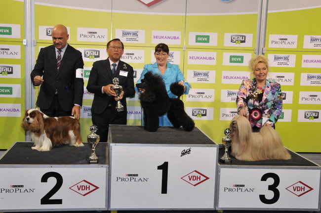 FCI group IX - Winners of the International dog show «Federal Winner 2015» Dortmund, 16 - 18 October 2015 (BIS photo)