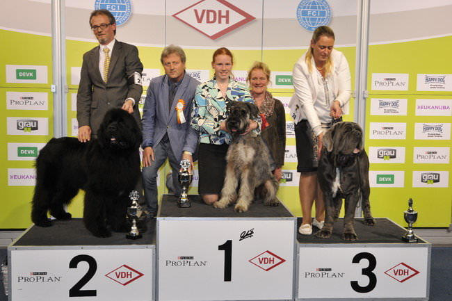 FCI group II - Winners of the International Dog Show Dortmund (Germany), 16 - 18 October 2015 (BIS photo)