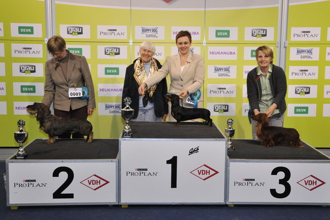 FCI group IV - Winners of the International Dog Show Dortmund (Germany), 16 - 18 October 2015 (BIS photo)