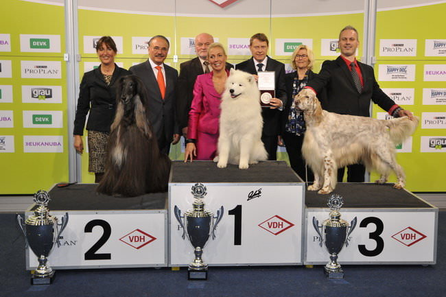 Best in Show (BIS) - Winners of the International Dog Show Dortmund (Germany), 16 - 18 October 2015 (BIS photo)