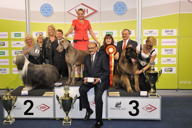 Best in Show - Winners of the International dog show «Federal Winner 2015» Dortmund, 16 - 18 October 2015 (BIS photo)