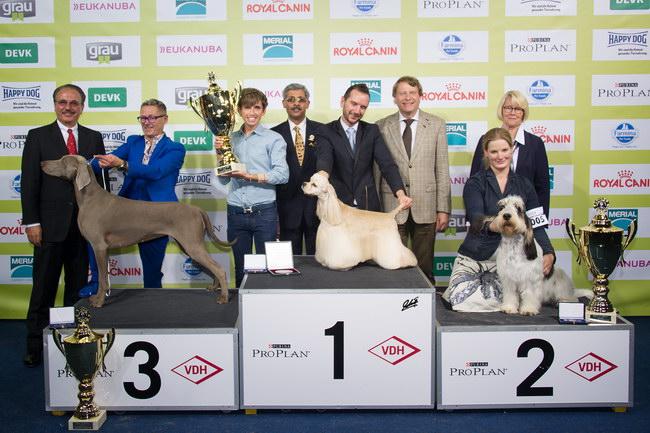 Best in Show (BIS) - BIS IDS «Bundessieger» Dortmund (Germany), 14-16 October 2016 (Photo)
