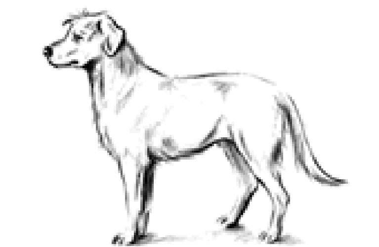hundehalter koerper hundes