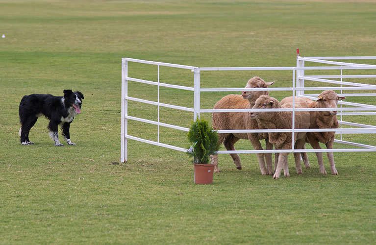 23d37b556ba765 Dog Shows » VDH.de