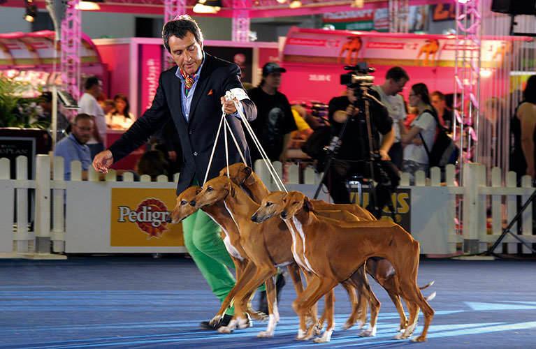Dog Shows » VDH de